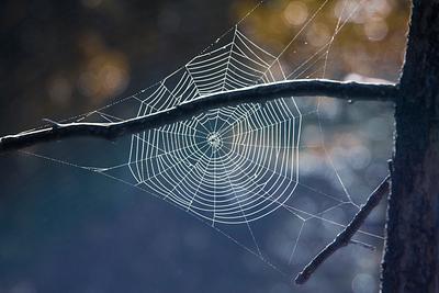 Walking amongst Webs