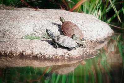 Three Turtles Sunbathing