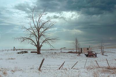 Tree on Hillside Farm  in Winter