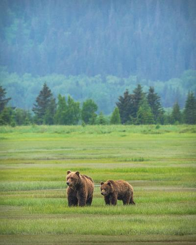 North by Northwest: The Perfect Alaskan Adventure