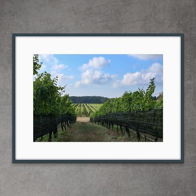 VINEYARD AND FARM
