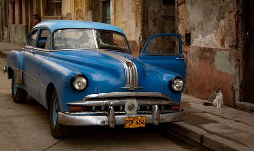 Classic American Car with Curios Cat in Havana