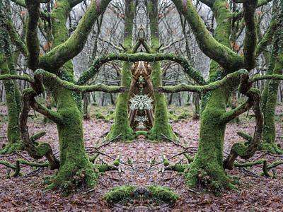 WOODLAND SHRINES