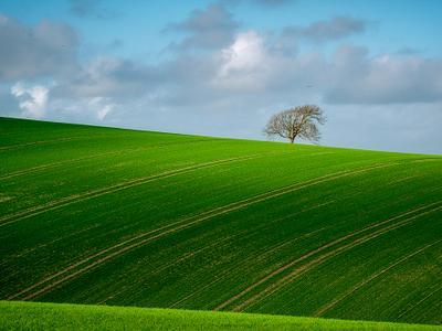 South Downs Landscape