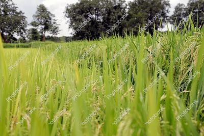 Crop Plantation