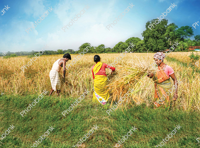 Indian Farmer with Crop