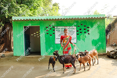 Indian Women with Goat