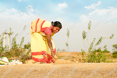 Indian Women with Crop
