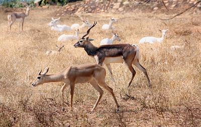 Animal & Wildlife