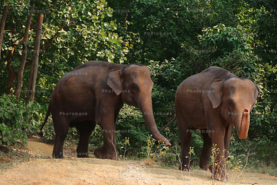 Wild elephant at dalma, Jharkhand