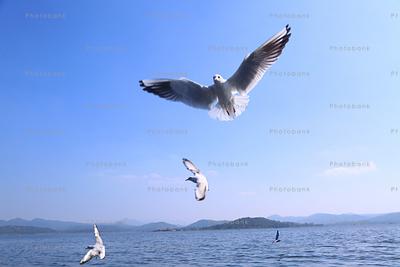 beautiful view of bird flying