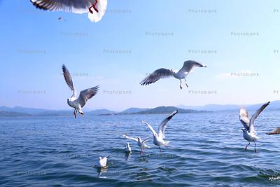 Siberian birds flying