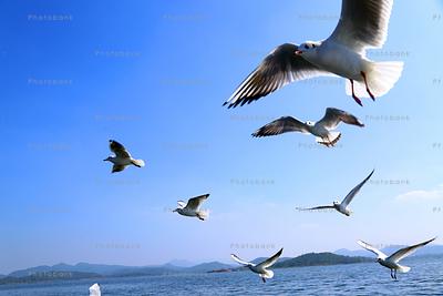 Siberian migratory birds flying