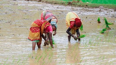 Farmers planting crops