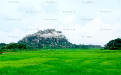 Green village landscape