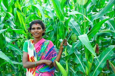 Woman standing in corn field