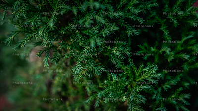 Beautiful green small leaves