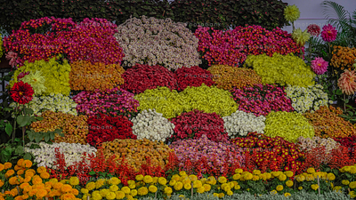 Different types of flower together