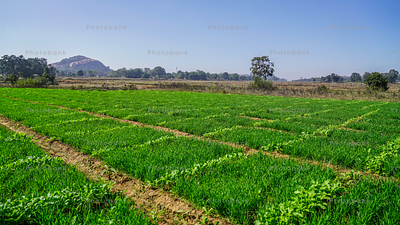 Village agriculture field