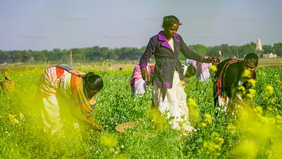 Women farmers in mustard field