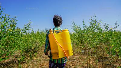 Farmer spraying chemical in field