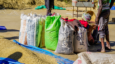 Rice packed in bags