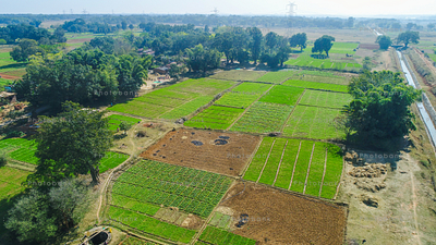 Aerial view of green field