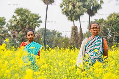 Two woman standing in golden mustard field