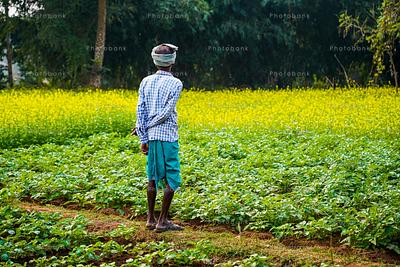 Farmer looking his green field