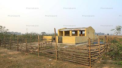 Pig  shed in village