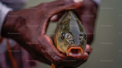 Fisher man holding fish in his hand