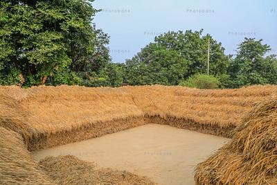 Crop stored after harvesting