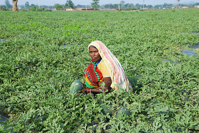 lady farmer holding fresh melons from her field
