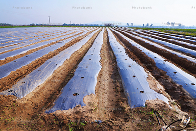 farm land getting ready for watermelon plantation in the state of jharkhand