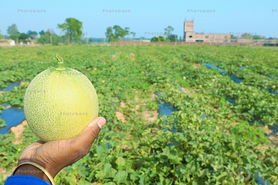 man holding fresh melons from his farm land