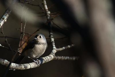 NEW IMAGES  |  ASSORTED SONGBIRDS