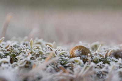 NEW IMAGES  |  SNAIL SHELLS