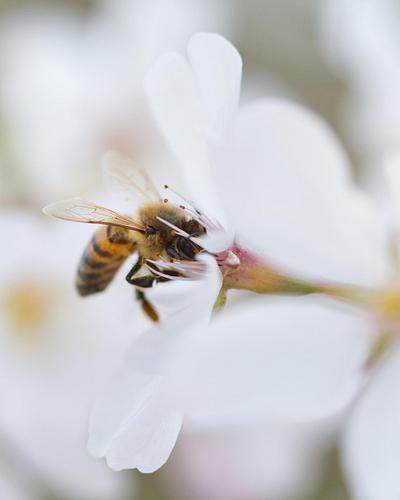 NEW IMAGES  |  SPRING BEES