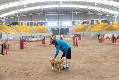 2019 Agility Dog Association of Australia National Grand Prix