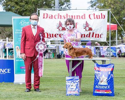 Dachshund Club of Qld Inc