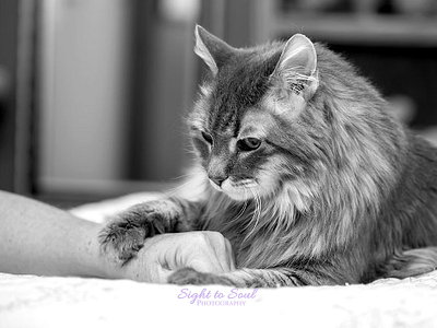 Pet Photography Information