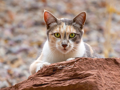 Pet Photography FAQs