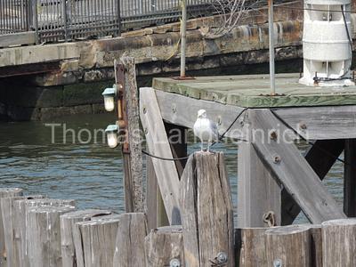 Docking Bird