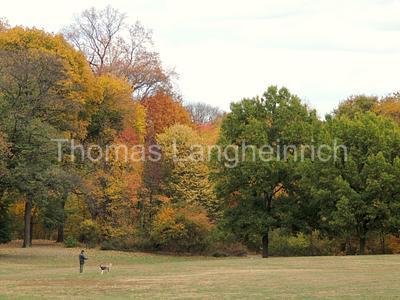 Fall Fetch