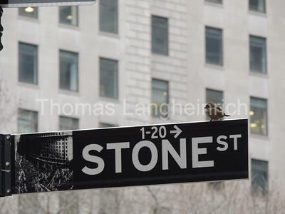 1 Stone, 1 Bird