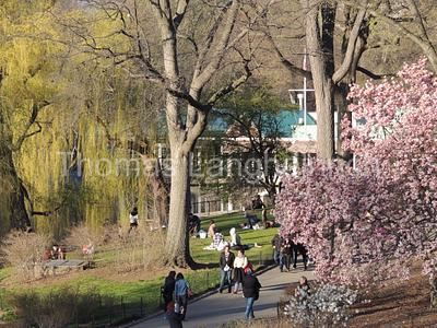 Park Stroll