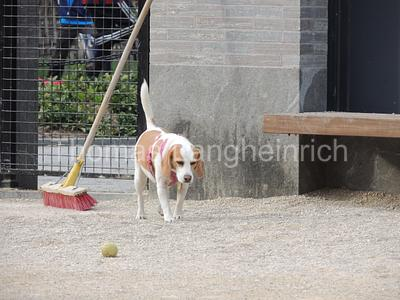 Slacker Pup