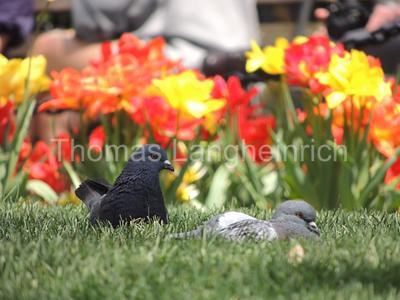 Pigeon Pad