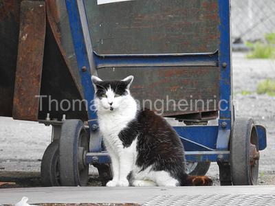 Industry City Cat
