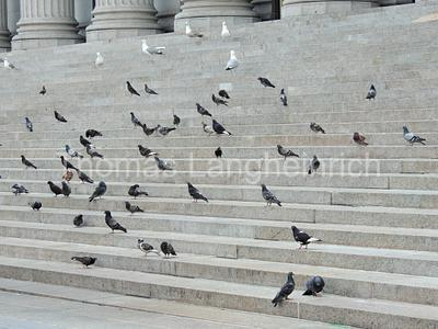 Stair Birds